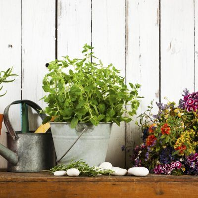 5 plantas que añaden color a tu patio